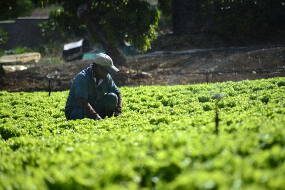 L'agriculture au centre des priorités de l'État | business-magazine.mu