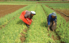 PPI - Agriculture