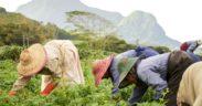Ferney Agri-Hub : remodeler l'agro-industrie vers le développement durable | business-magazine.mu