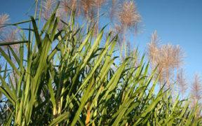 L'appréciation du dollar fait baisser les prix du sucre sur le marché mondial | business-magazine.mu