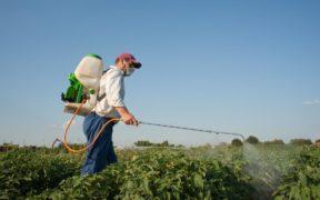 Pest control : La demande en hausse depuis l'apparition de  la pandémie | business-magazine.mu