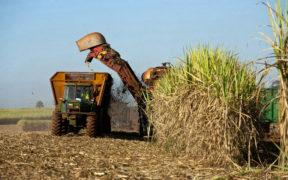 Secteur sucrier  - La Banque mondiale finalise les axes de la réforme | business-magazine.mu