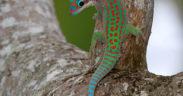 The Lux Collective s'associe avec Mark Read pour sauver nos espèces endémiques | business-magazine.mu