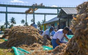 Creative Park de Beau Plan : plus de 1 500 volontaires réunis pour limiter les dégâts causés par le MV Wakashio | business-magazine.mu
