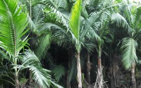 Au coeur du palmiste | business-magazine.mu