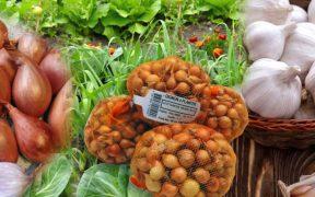 large-oignons-ails